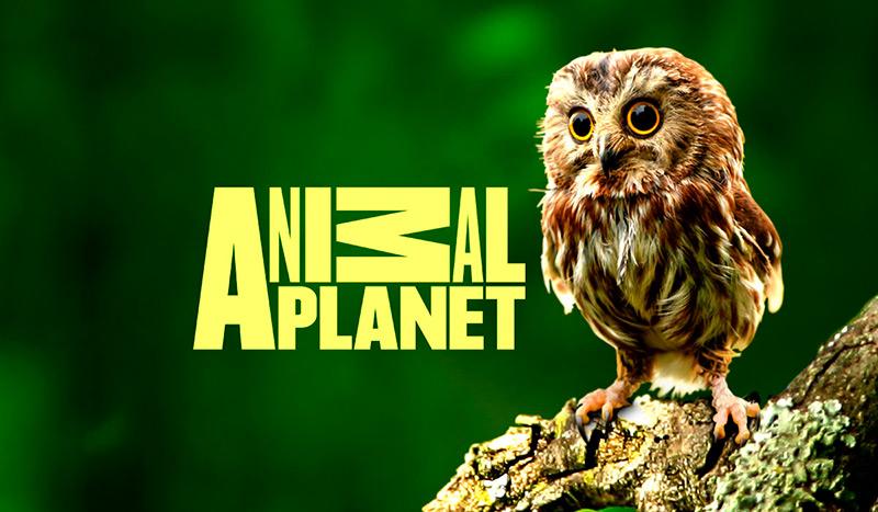 Канал Animal Planet