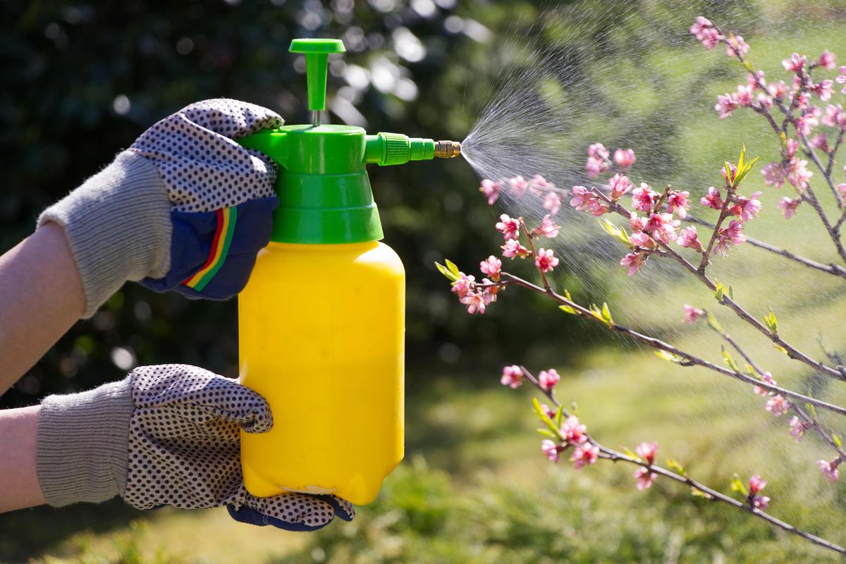 Инсектициды для сада