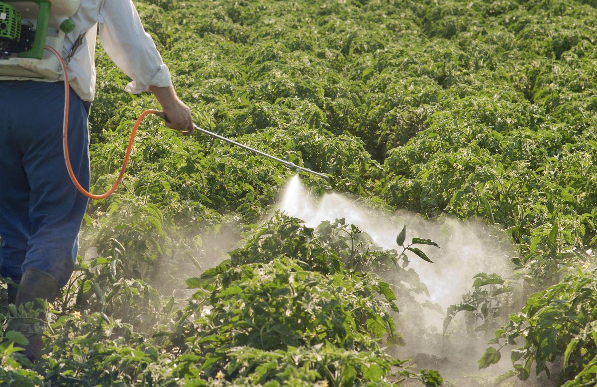 Инсектициды для огорода